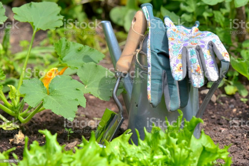 gardening tools in garden royalty-free stock photo