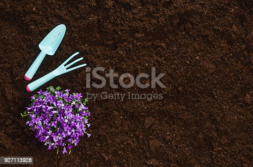 927125180 istock photo Gardening tools on garden soil texture background top view 927113928