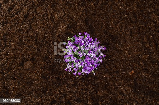 927125180 istock photo Gardening tools on garden soil texture background top view 930468000
