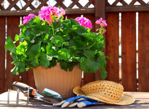 Gärtnerntools Stockfoto und mehr Bilder von Blume