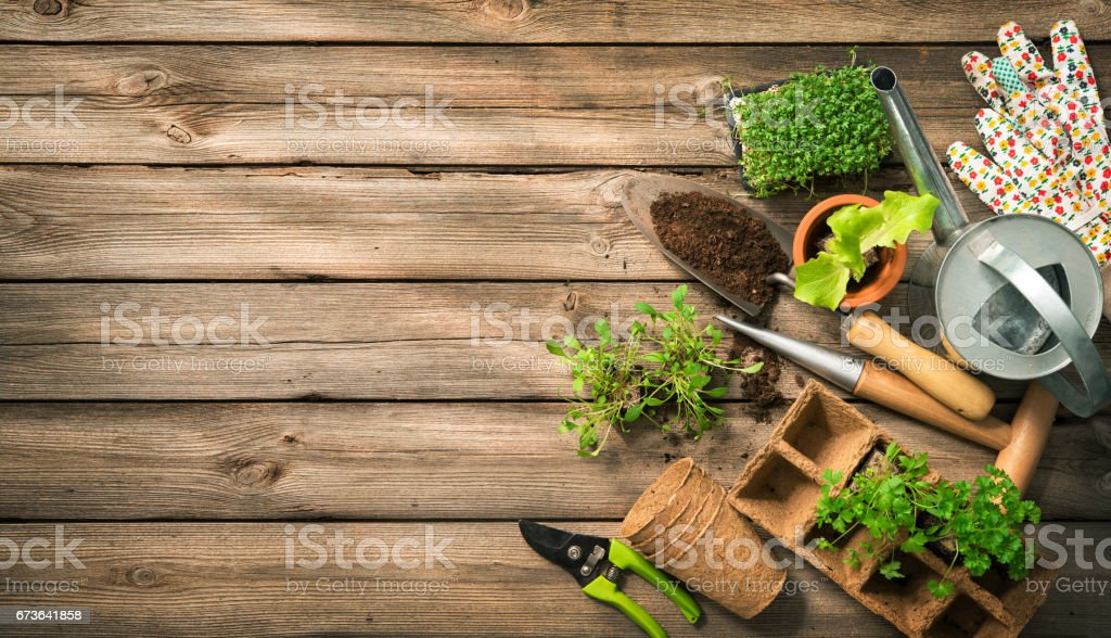 Gardening tools, seeds and soil on wooden table stock photo