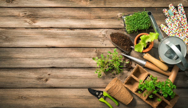 Gardening tools, seeds and soil on wooden table Gardening tools, seeds and soil on wooden table. Spring in the garden grounds stock pictures, royalty-free photos & images