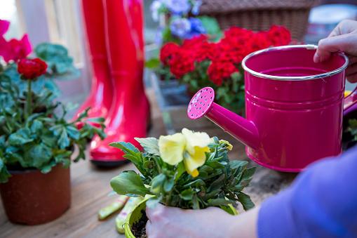 Photo libre de droit de Outils De Jardinage Arrosoir Fleurs Gants Bêche Sol  Ressort Dans La Disposition De Concept De Jardin Avec Lespace De Texte ...