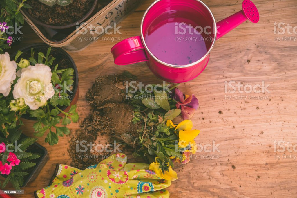 Gardening tools: watering can, flowers, gloves, spade, soil. Spring in the garden concept layout with free text space. foto stock royalty-free