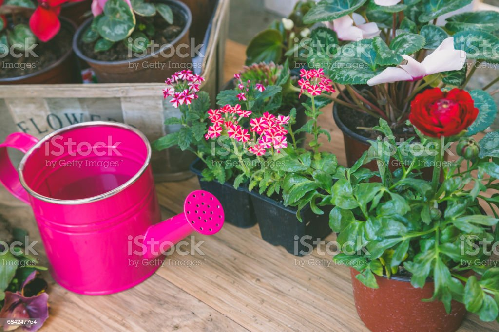 Gardening tools: watering can, flowers, gloves, spade, soil. Spring in the garden concept layout with free text space. royalty-free stock photo