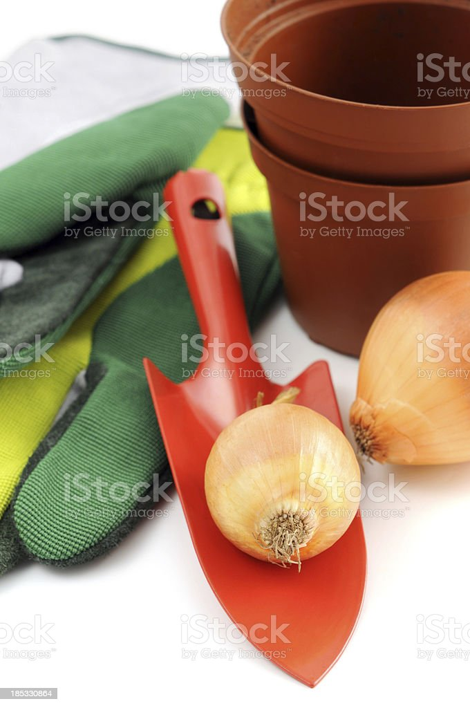 Gardening trowel Gloves with flower pot and onions stock photo