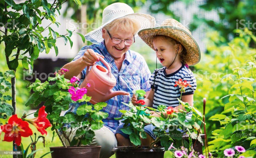 Jardiner avec un enfants. Senior femme et sa petite-fille, travailler dans le jardin avec une plantes. Loisirs et vie familiale, loisirs, mode de vie - Photo de Adulte libre de droits