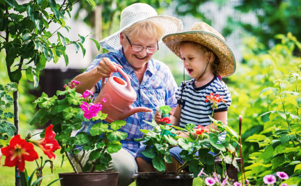 Gardening with a kids. Senior woman and her grandchild working in the garden with a plants. Hobbies and leisure, lifestyle, family life stock photo