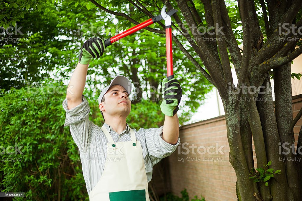 Gardening with apron using red shears on a tree stock photo