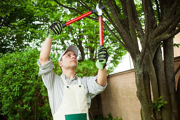 Gardener Stutzen einem Baum – Foto