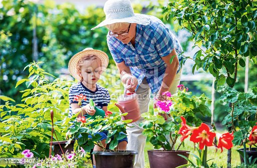 istock Gardening with kids. Senior woman and her grandchild working in the garden with a plants. Hobbies and leisure, lifestyle, family life 1132354407
