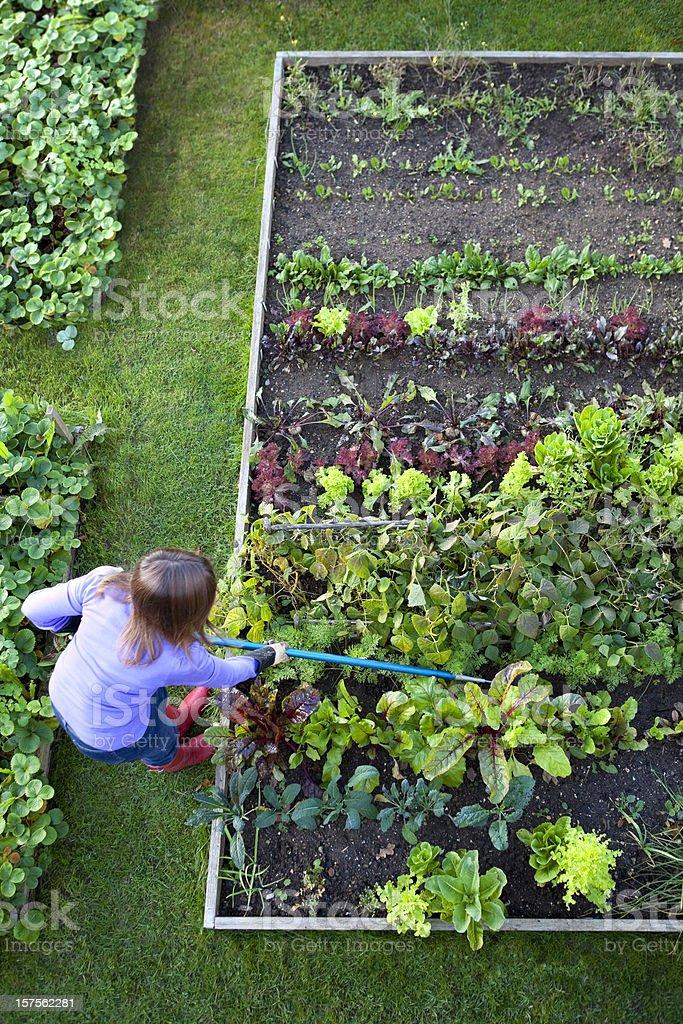 Gardening Woman Weeding Vegetable Garden royalty-free stock photo