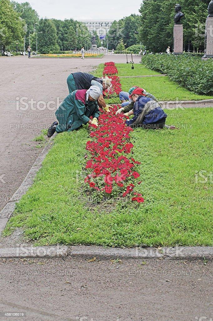 Gardening work stock photo