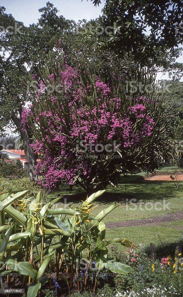 Gardens and Tropical Plants along shoreline Lake Kivu Gisenyi Rwanda stock photo