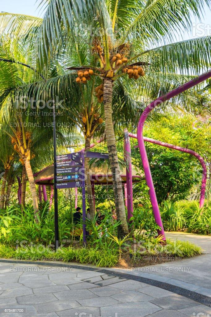 Jardins du parc de baie à Marina Bay, Singapour photo libre de droits
