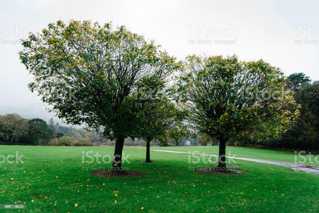 Gärten des Muckross House in Irland - Lizenzfrei Baum Stock-Foto