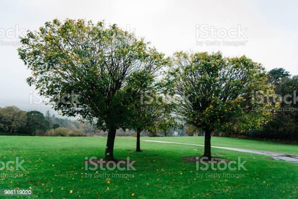 Gärten Des Muckross House In Irland Stockfoto und mehr Bilder von Baum