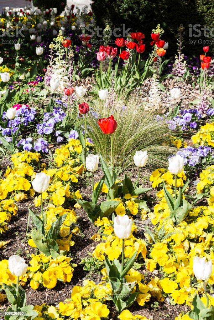 gardin de flores con flores de colores diferentes - Foto de stock de Aire libre libre de derechos