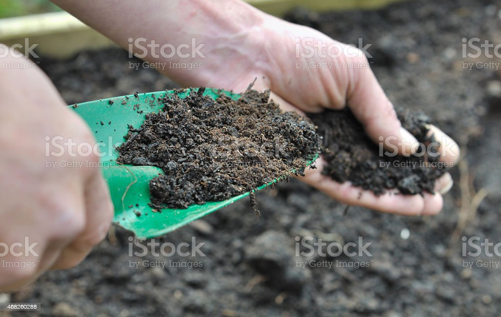 Gardner composting soil in garden hand man holding a gardening tool full with compost for garden 2015 Stock Photo