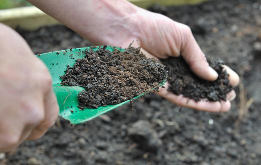 Gardner Composting Soil In Garden Stock Photo - Download Image Now