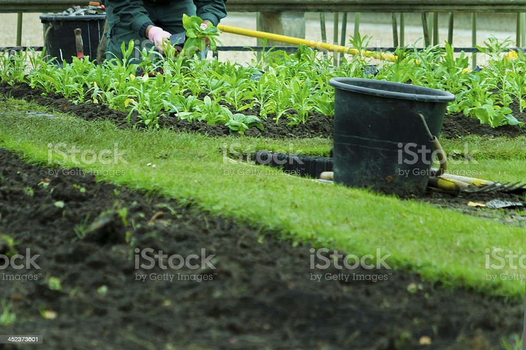 Gardner Planting - Copy Space stock photo