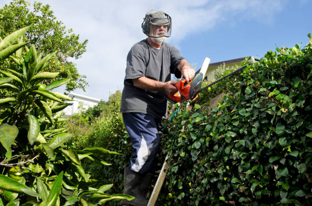 gardner trimming hedges - chainsaw stock photos and pictures