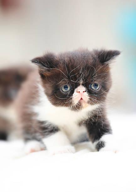 Garfield cat picture id615104430?b=1&k=6&m=615104430&s=612x612&w=0&h=sixnc6pwmf9orff1xyobnjjc6kr3zbx hauujaguygu=