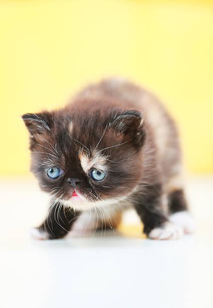 Garfield cat picture id615104720?b=1&k=6&m=615104720&s=612x612&w=0&h=9d6sdeoq9z1hk9czfqtjc1dn9oymvm t ntgjm xwya=