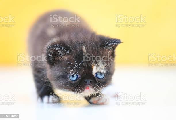 Garfield cat picture id615104888?b=1&k=6&m=615104888&s=612x612&h=jva2pdds81mzpaxzefeqr7eymu05akeoolhww77eux4=