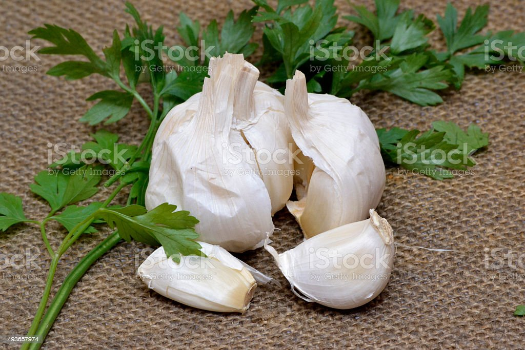 garlic and parsley on canvas background stock photo