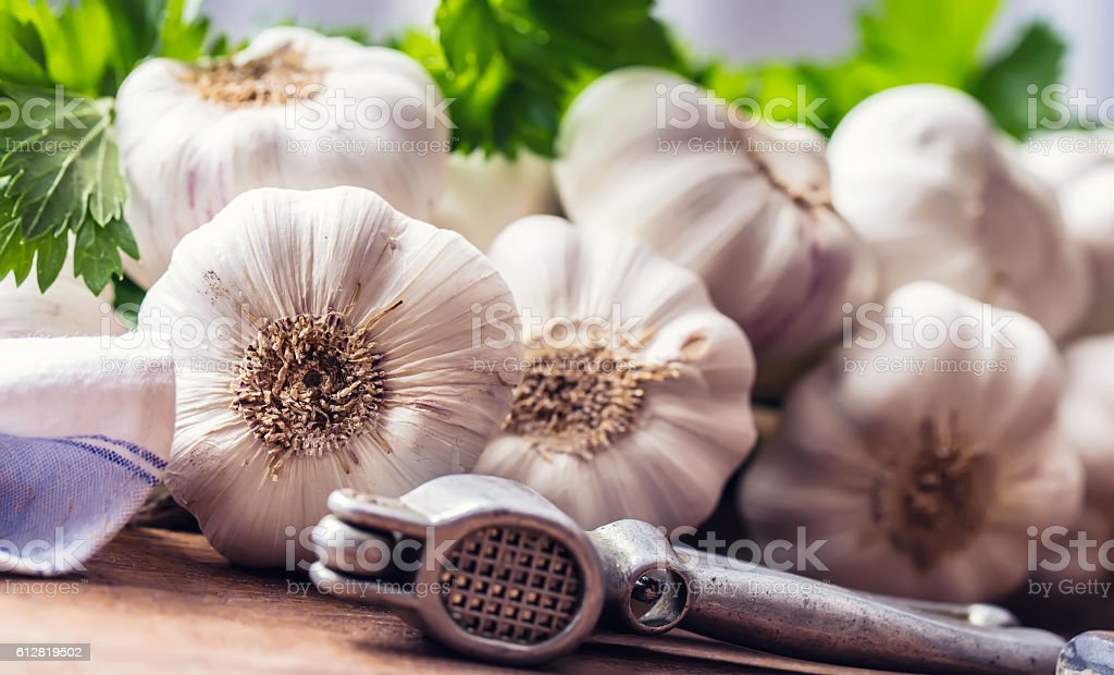 Garlic. Bunch of fresh garlic with celery herbs – Foto