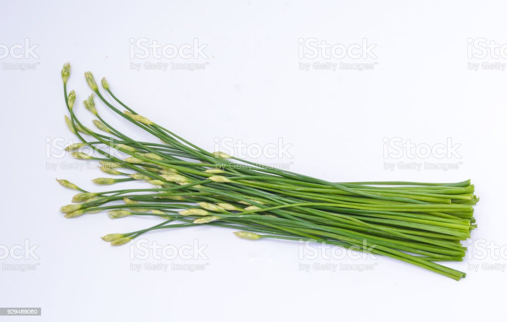 Garlic chives on white background stock photo