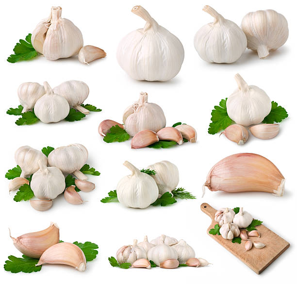 Garlic collection stock photo