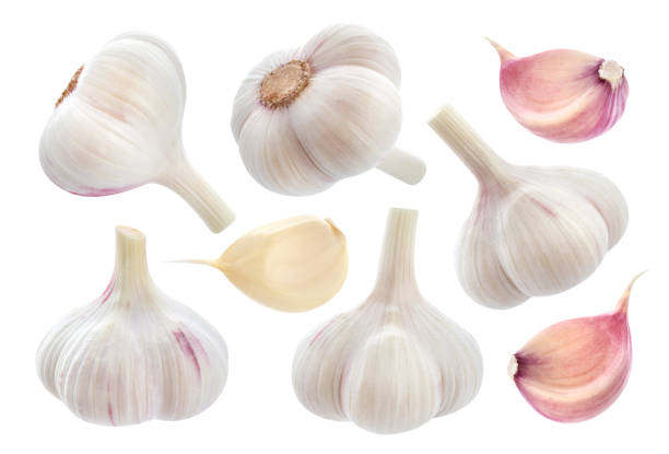 garlic isolated on white background. collection - garlic stock photos and pictures