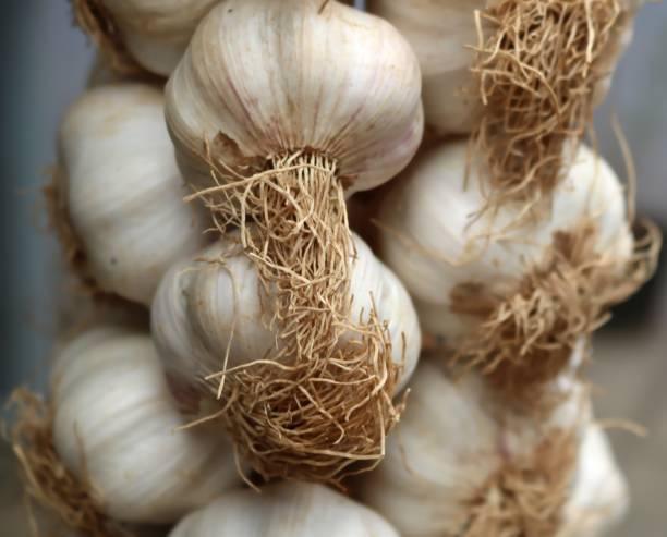 Knoblauch auf einem Markt, Detail. Close-up – Foto