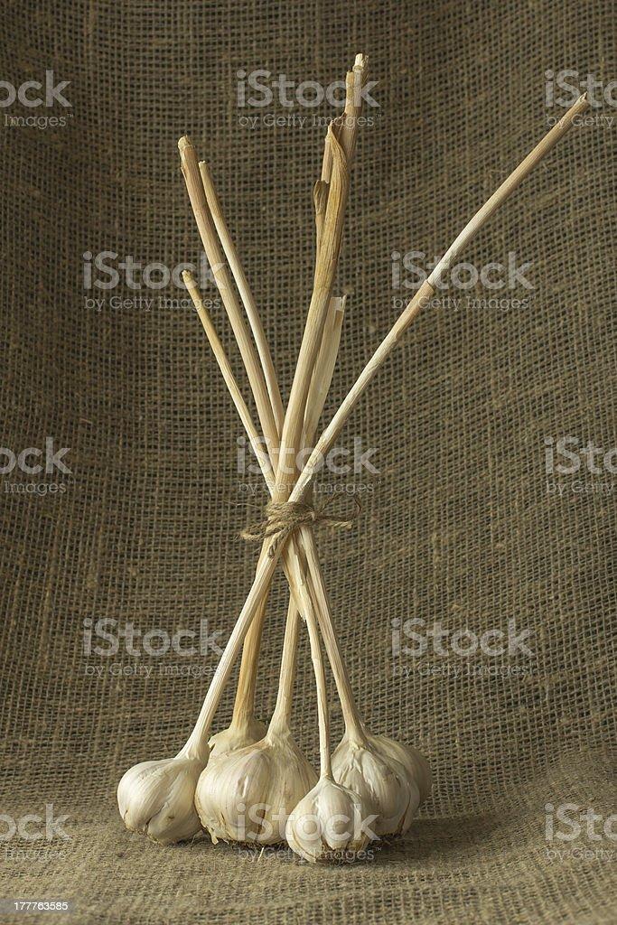 Garlic on a sacking royalty-free stock photo