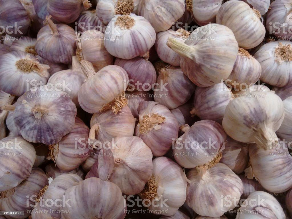 Garlic, softneck garlic, hardneck garlic, softneck garlic, rocambole, top-setting garlic or serpent garlic stock photo