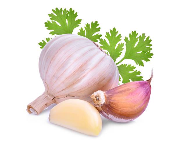 garlic with coriandrum sativum leaf isolated on white background – zdjęcie