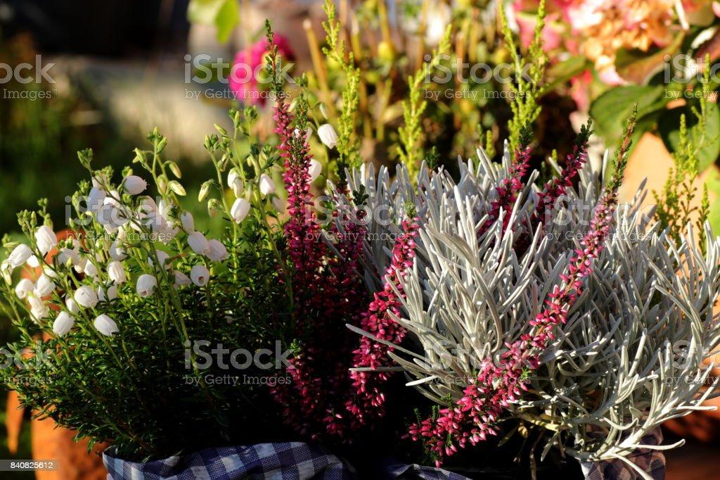 Gartendekoration Aus Blumen Und Heidekraut Stock Photo | Istock