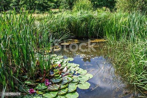 Dieser Gartenteich dient als naturbelassenes Biotop vielen Lebewesen als Lebensraum.