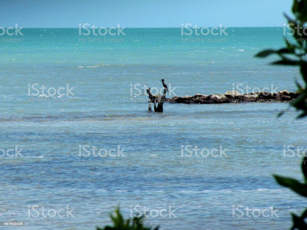 Garza en el oceano stock photo