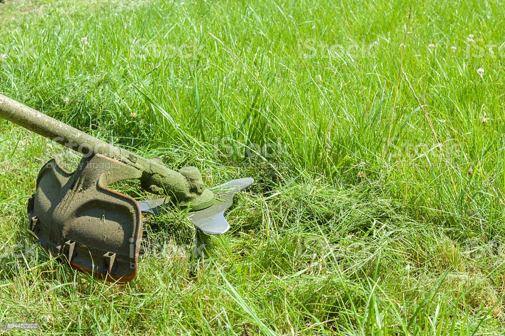 Gasoline lawn trimmer mowing green grass. stock photo