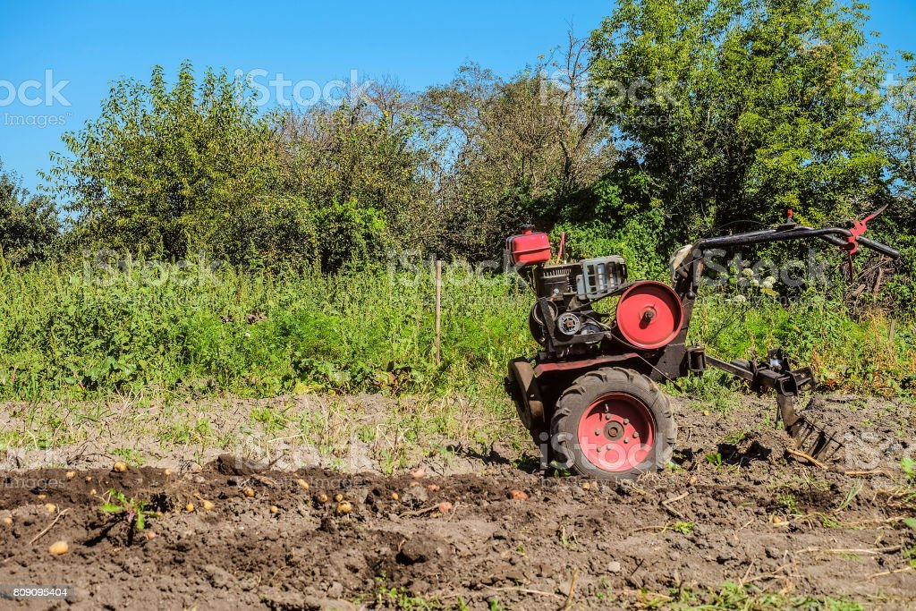 Gasoline motor cultivator near the furrow. Harvest of young potatoes. stock photo