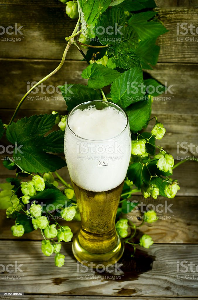 Gass of cold beer with hops Lizenzfreies stock-foto