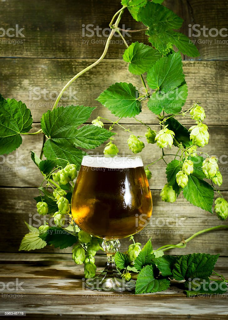 Gass of cold beer with hops royalty-free stock photo