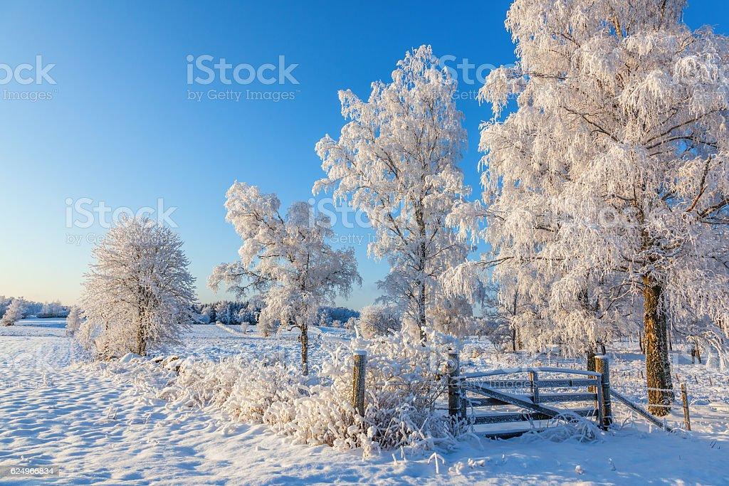 Gate in a winter landscape - foto de stock