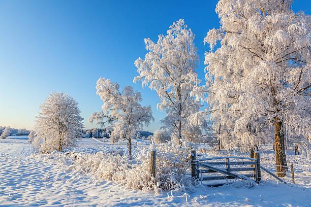 gate in a winter landscape - arbre à feuilles caduques photos et images de collection