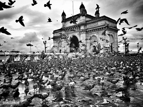 Pigeons in flight near gateway of India