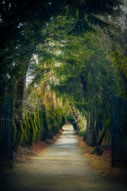 Gateway to enchanted forest path stock photo
