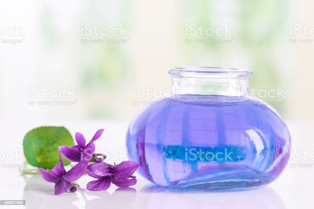 Gathered viola flower Viola Odorata . Raw materials for essential oils stock photo